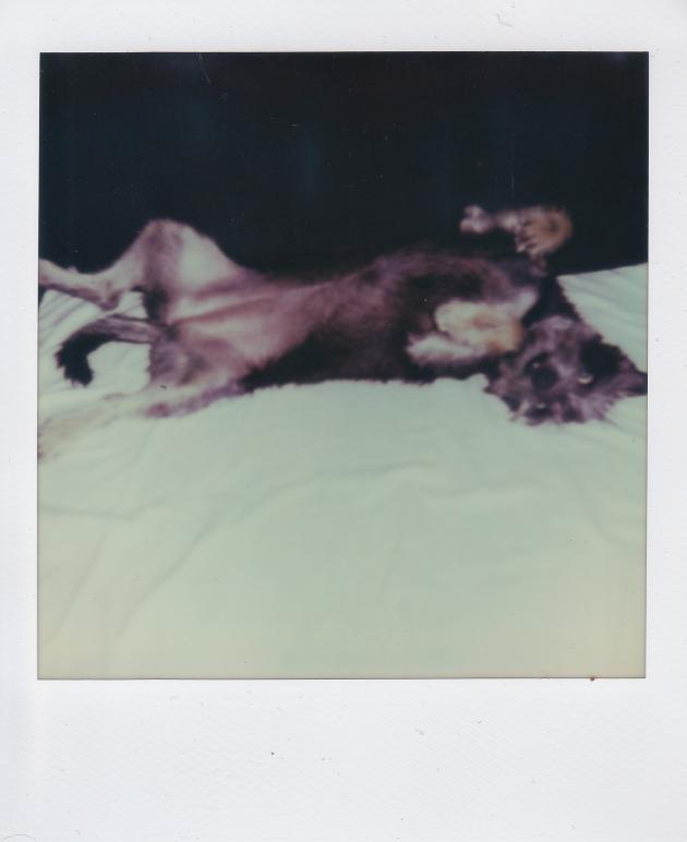 Boston - Polaroid